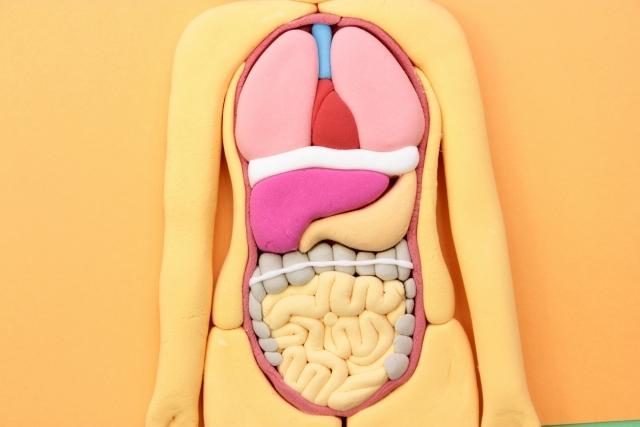 腸を元気に!腸内環境を整える生活習慣&食事~食通信2017年5月号vol.1~