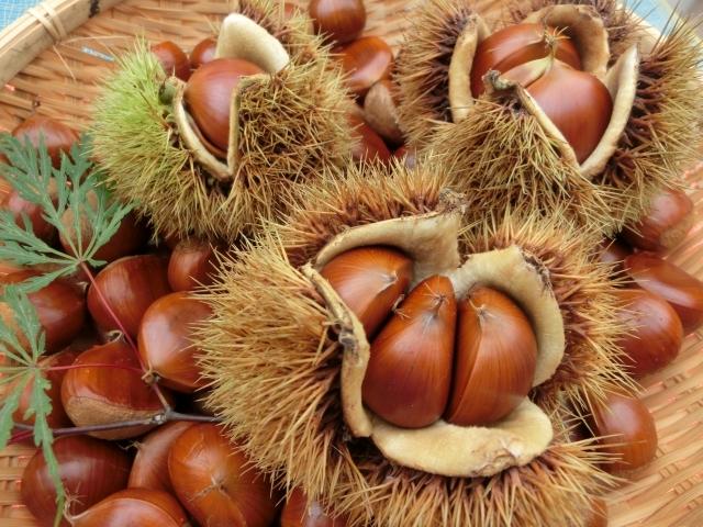旬の時期に旬の食材を。秋に食べたい栄養たっぷりの食材とその効果
